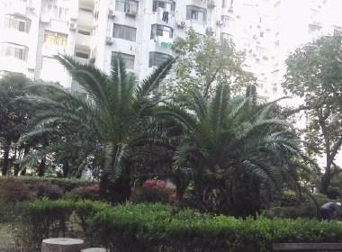 西凌新邨(西凌家宅路111弄) 2室1厅1卫